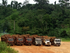 A log truck parking lot (the truckers have various stopping points where they can rest, eat and sleep before continuing on with their journey)