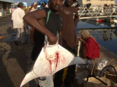 A fisherman proudly shows off a manta ray for sale at the fish market in Djibouti