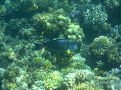 Great snorkeling near the Gulf of Tadjoura