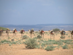 Close up of the camel train (we were surprised to see women guiding the camels across the inhospitable terrain)