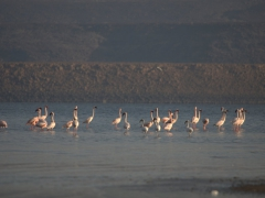 After sunrise, we strolled over to the nearby lake to see the flamingos that gather here in the early morning to feed