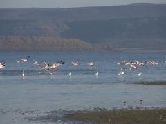 As soon as we got too close, the flamingos took flight