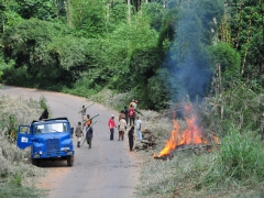 Burning bamboo in the Congolese countryside