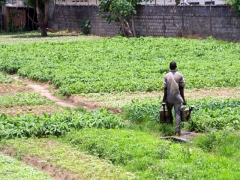 A gardener hard at work in Muanda