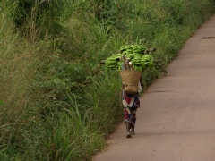 A plantain laden woman carries a heavy load uphill