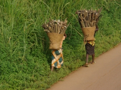 Women carrying heavy loads of wood by the basketful
