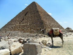 A camel stands forlornly outside the smallest of the Giza Pyramids at 62 meters, the Pyramid of Menkaure