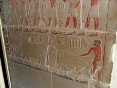 Men leading cows into a tomb at Saqqara