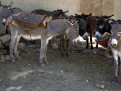 Donkeys rest in the shade
