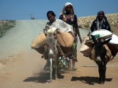 Girls trailing their donkeys