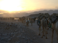 Dusk view of a camel caravan (a scene that could have played out since Biblical times)