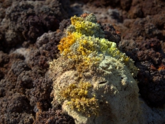 Detail of the colorful salt formations beneath our feet at Dallol
