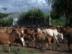 Morning traffic jam on one of Arba Minch's main roads