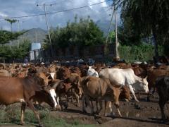 Morning traffic jam on one of Arba Minch's main roads