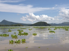 Don't let this serene scene fool you. Locals say every year, fishermen and cattle are killed by crocodiles at Lake Chamo