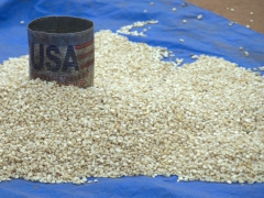A recycled tin can (USA vegetable oil) is used to scoop corn at the Turmi Market