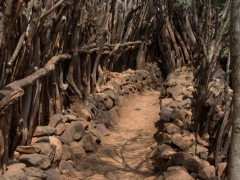 Defensive town walls and low stick and stone walls built in a labyrinth of narrow shady alleys are characteristic of a Konso settlement