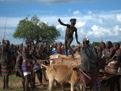 Just a few more feet! The initiate holds his breath as he is mere seconds away from completing the bull jumping ritual