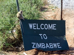 """A monkey greets us on top of a """"Welcome to Zimbabwe"""" sign at the Kazungula Road border post"""