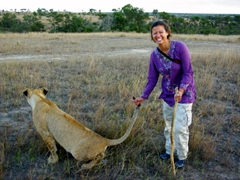 Becky laughs as Meeka pees while she is holding her tail on our lion walk; Antelope Park