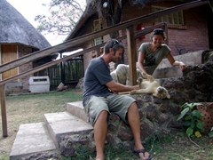 This lion cub loved having its belly rubbed and we happily obliged