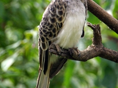 Side profile shot of an African Grey Hornbill