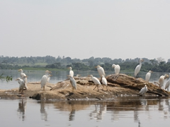 Meanwhile, the birds are pretty oblivious to our plight as they calmly watch the world pass them by; Nile River