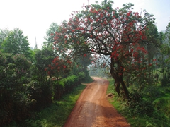 A beautiful natural arch on a dirt road leading from Lake Bunyonyi to Kabale
