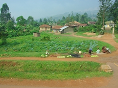 A roadside vegetable stand; Kabale