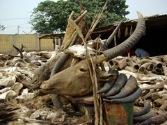 A myriad of horns, skulls and carcasses are in high demand by voodoo practioners at the Akodessewa Fetish Market, the largest of its kind in west Africa