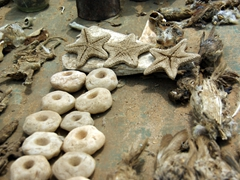 A bizarre assortment of voodoo ingredients, star fish next to bird carcasses at the Akodessewa Fetish Market