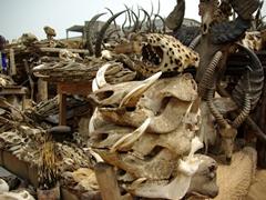 Cheetah and warthog skulls for sale; Akodessewa Fetish Market