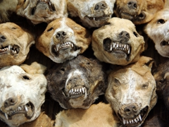 Snarling dog heads can be bought at Lomé's Akodessewa Fetish Market