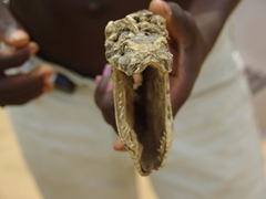 A gaping snake jaw is held out for display at the Akodessewa Fetish Market