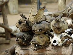 We spent the better part of an hour perusing the various animal carcasses on display at Lomé's fetish market and felt that while it is truly a gruesome exhibition, the market experience itself provided a rare insight into Togo's thriving voodoo culture