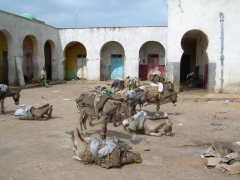 Donkeys lounge about waiting for their owners to return from shopping at Harar's market