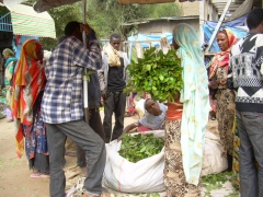Locals haggle over the price of khat; Harar market