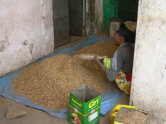 A lady sifts coffee shells to make Harari tea