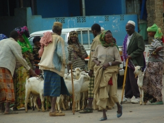 A goat herders' meeting; Harar
