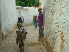 Becky smartly moves out of the donkeys' way; back streets of Harar