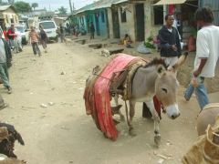 A donkey transports the skin of a freshly slaughtered animal; Harar