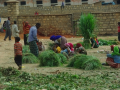 Bundles of grass for sale just outside the cattle market; Harar