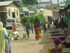 Young women carrying bundles of grass through Harar's back streets