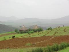 A picturesque farming scene