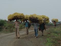 Ethiopians balancing loads of hay; Lalibela countryside