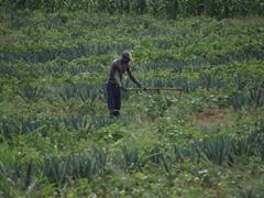 A farmer hard at work; Tanzanian countryside