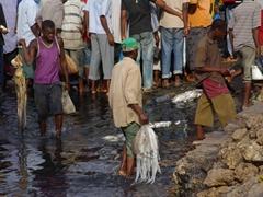 The chaotic fish market scene of Zanzibar
