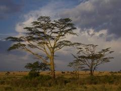 Serengeti at dusk
