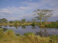 A peaceful scene in the Serengeti