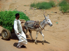 A donkey with a mind of its own pulls a cart load of grass while its owner attempts to restrain it